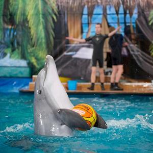 Дельфинарии, океанариумы Лисьего Носа