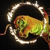 Цирки в Лисьем Носе